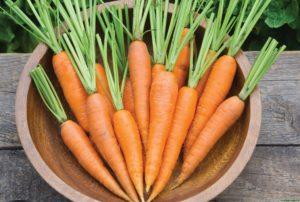 Морковь при подагре можн